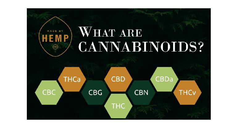 Que sont les cannabinoïdes (et pourquoi sont-ils importants) ? 1