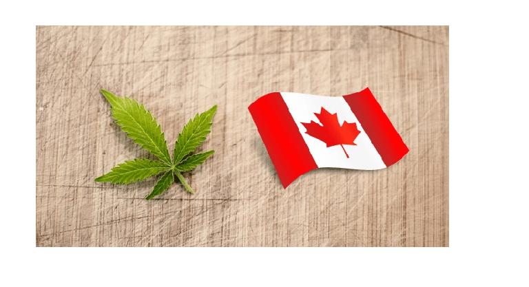 Le mariage de la Corona et du cannabis 1