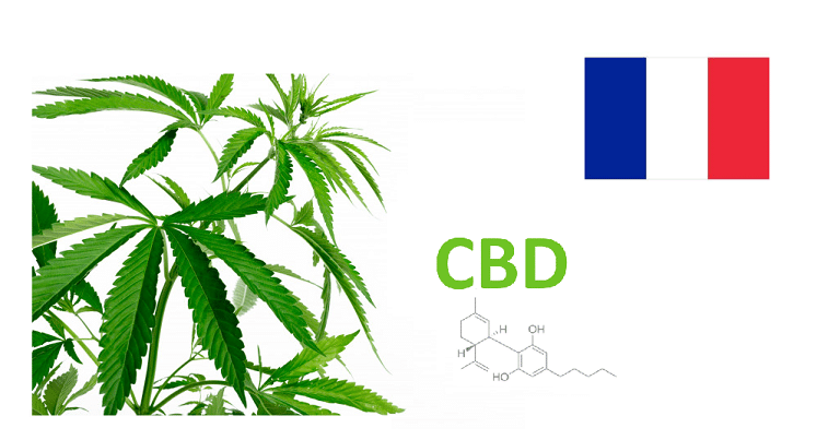 CBD en France: les secrets d'une substance étonnante 1