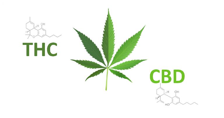 CBD ou THC : quelle différence ? 6