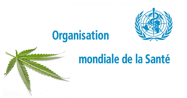 Reclassement du cannabis: l'OMS favorable 1