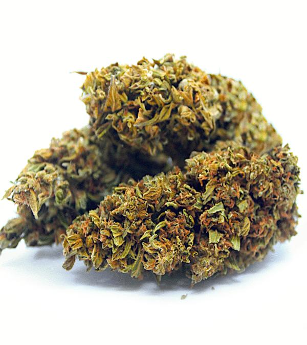 Fleurs CBD Tropicana 2