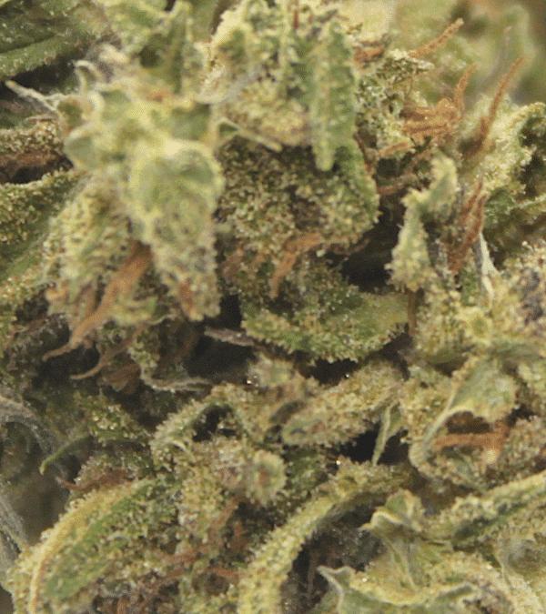 Fleurs CBD Dynamite 3