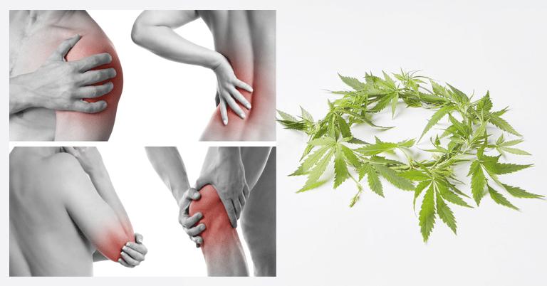 Le chanvre CBD peut-il aider les patients atteints de fibromyalgie ? 1
